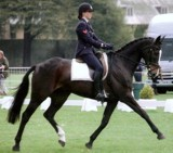 Bug in medium trot at Belton